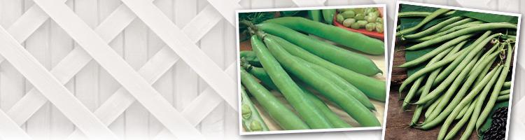 A-Z Pea & Bean Seeds