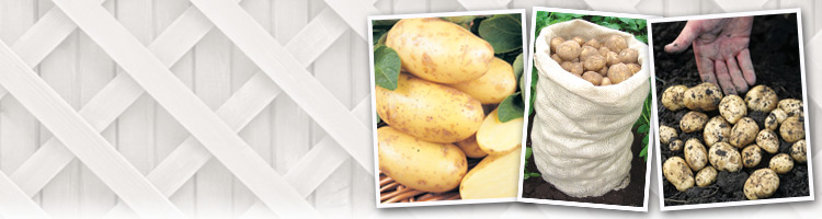 Patio Potato Kit from Mr Fothergill's Seeds and Plants