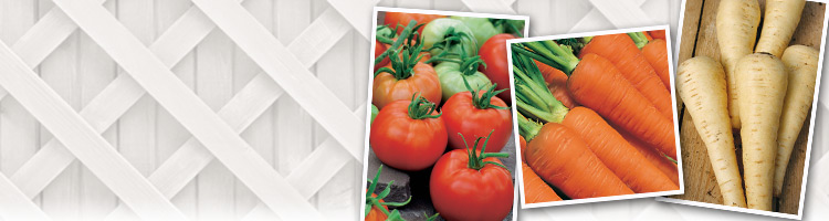 New Variety Vegetable Seeds
